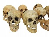 picture of cranium  - Old archaeological find human skull cranium isolated on white background - JPG