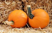 image of fall decorations  - a pair of pumpkin with hay for Fall decoration  - JPG