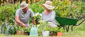 foto of grandfather  - Happy grandmother and grandfather gardening on a sunny day - JPG