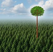 stock photo of prosperity  - Stand out from the crowd concept as a forest of evergreen trees with a successful leaf tree standing high above the competition as a business metaphor for individuality and different individual distinction to prosper as an outsider - JPG