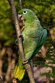 foto of rainforest  - Portrait of green parrot sitting on branch in the amazon rainforest - JPG