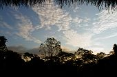 picture of rainforest  - Silhouette of trees in the amazon rainforest against the blue sky - JPG