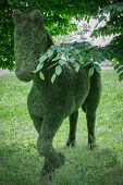 foto of garden sculpture  - A hedge shaped of a horse in a botanic garden - JPG