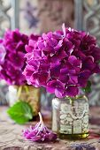 picture of hydrangea  - beautiful purple hydrangea flowers in a vase on a table - JPG