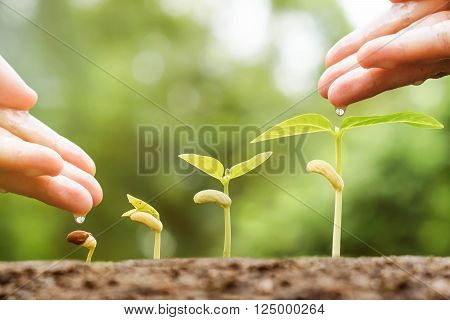 Hand nurturing young plants growing in germination sequence with chemical fertilizer