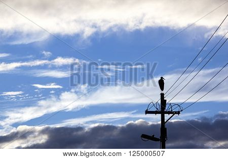 Silhouette Of Bird On Electricity Pole With Wintry Clouds