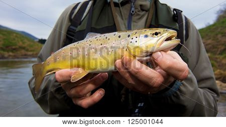 Fy fisherman holding a brown trout- Slovenia