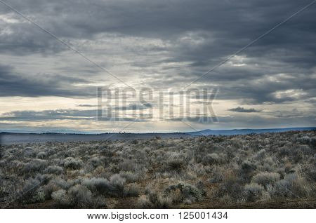 Sprawling landscape of desert shrubs with a cloudy sky