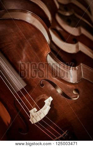 Close up of a group of cellos in the workshop of violin maker