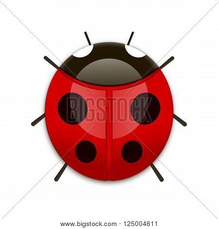 flat Vector icon - illustration of ladybug icon isolated on white