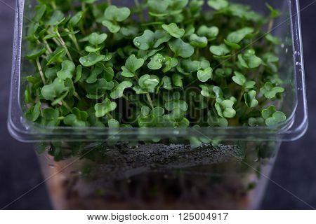 Fresh Cress Salad on Plastic Container on Dark Background