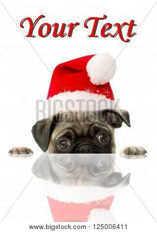 Pug puppy on white background with santa hat.