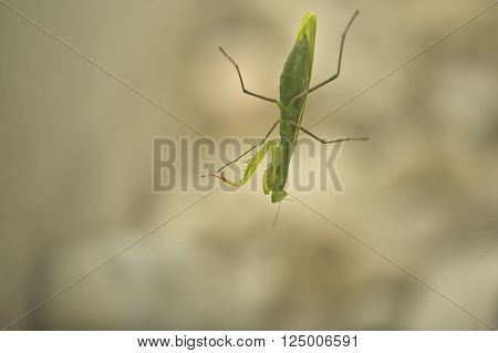 A Praying Mantis on a front porch glass door.