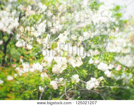 Swirly bokeh abstract blurred nature tree background white flower and green leaves