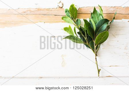 Bay Leaf Spice