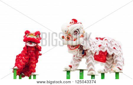 Chinese lion costume dance during Chinese New Year celebration