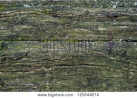 Old mossy wooden texture. Vintage rustic style. Natural surface, background and wallpaper