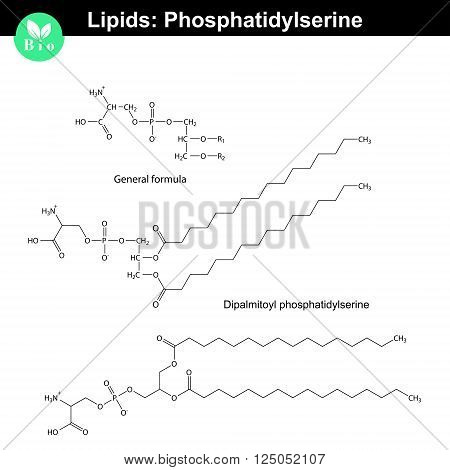 Phosphatidylserine chemical structure molecular structures of lipids isolated on white background 2d vector eps 8