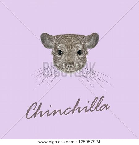 Cute fluffy face of Chinchilla on pink background.