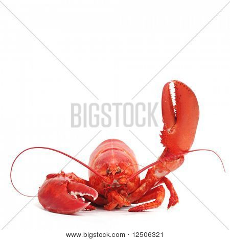 hello lobster