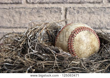 A miscellaneous concept that could represent a professional major leaguer being born or a pro baseball athlete being able to retire from the sport or anything that may be used in conjunction with the rare coming together of a hardball in a real birds nest