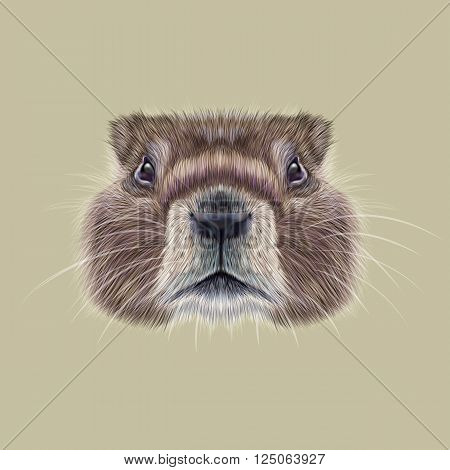 Cute face of meadow Rodentia animal on beige background.