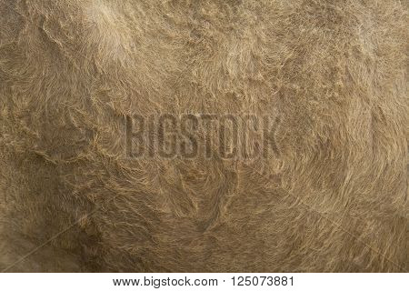 Vintage Style Brown Cow Fur Background
