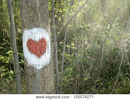 Heart painted on tree trunk health path symbol in scenic deciduous forest with spring Sun casting its warm rays trough the foliage. Sunlight in the green forest. Sunlit spruce Springtime. Tree gazing in woods.
