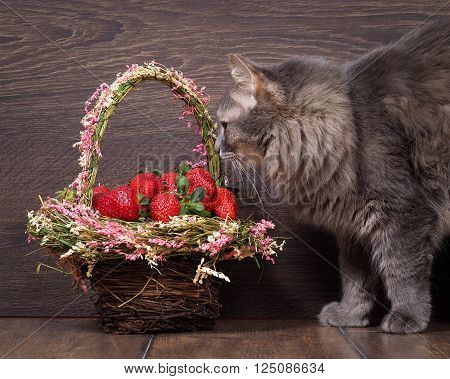 Big gray cat and a basket of strawberries. Cat fluffy. Shopping beautiful. red berries. Background wood