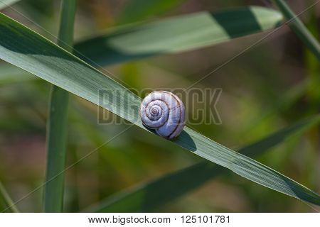 Tucked away in a snail shell on the green leaf. Nature