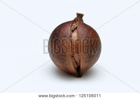 Cracked open macadamia nuts on white background