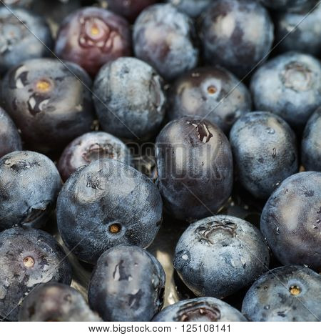 Surface coated with the multiple ripe bilberries as a backdrop texture composition