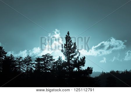 Backlit forest blue tone silhouette as setting sun catches on passing clouds lighting the sky above