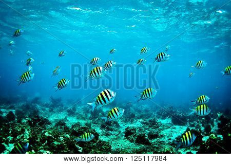 A school of tropical fish swimming past hard coral formations.