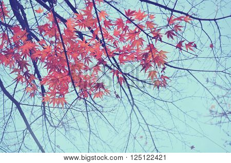 Colorful foliage in the autumn park; Autumn leaves sky background; Autumn Trees Leaves in vintage color