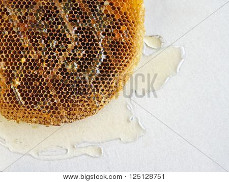 honeycomb with honey on a white background