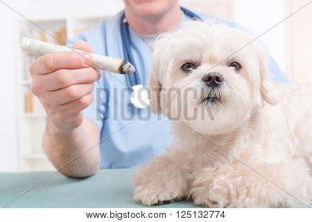 Vet doing moxa treatment on little dog