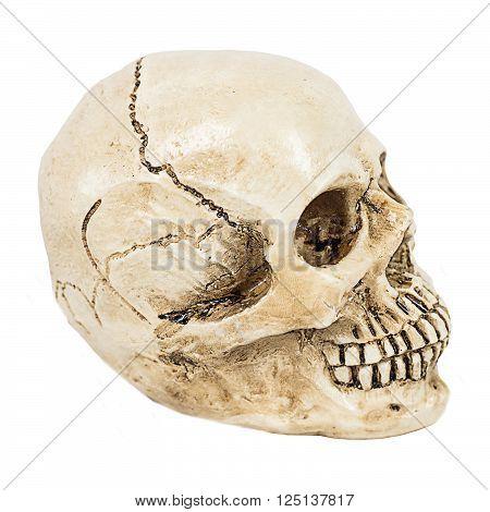 white skull of human on white background.