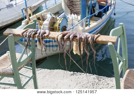 Octopus drying on a stick in Chania Greece