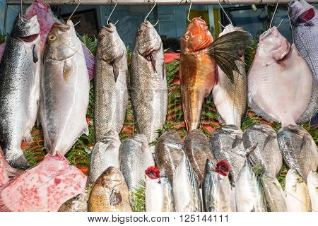 Fresh fish hanging on hooks at a fish market in Istanbul, Turkey