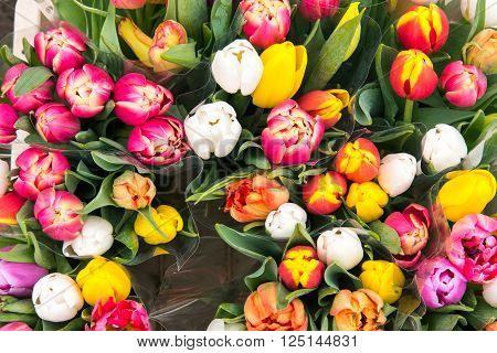 Tulips for sale at a flower markt