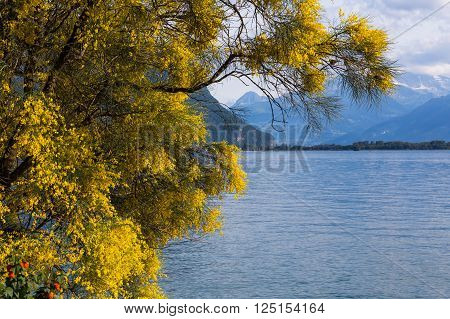 Mountains and lake Geneva from the Embankment in Montreux. Switzerland
