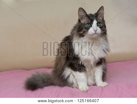 Domestic beautiful cat with big green eyes