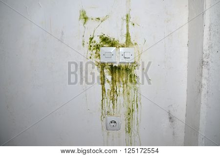 Green mold on white wall with plastic switch sockets and power plug ** Note: Soft Focus at 100%, best at smaller sizes