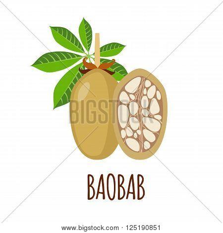 Baobab vector logo  in flat style. Baobab icon. Isolated object. Superfood baobab fruit. Vector illustration.