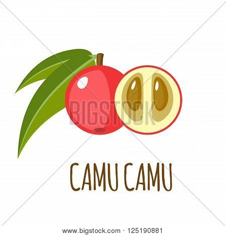 Camu camu vector logo  in flat style. Isolated object. Superfood camu cmu fruit. Vector illustration.