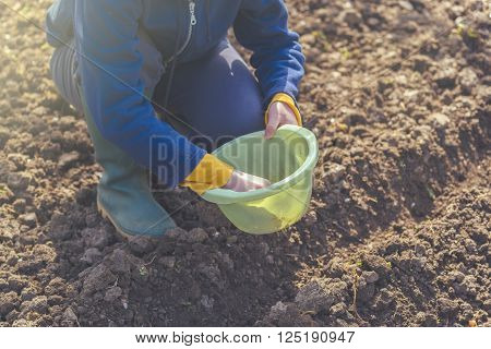 Woman seeding onions in organic vegetable garden young adult female planting seeds in the arable soil.