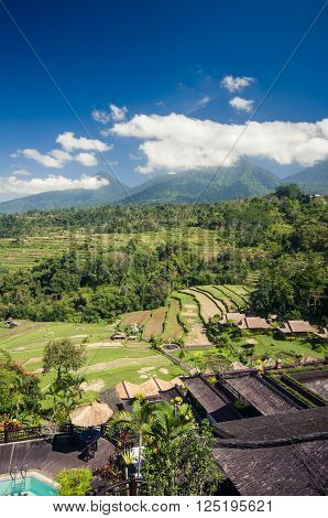 Rice field Bali Indonesia Southeast Asia Asia