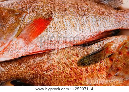 two raw fresh bass fish on ceramic plate prepared