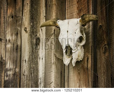 a wall with a steer or cow skull and horns attached in some sort of ornamental decoration in a rural area